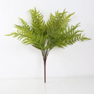 KAARLE LOQUAT LEAVES PLANT