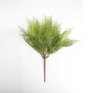 CELERY PARAKEET PLANT
