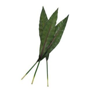 KAACHINA RICH LEAF PLANT