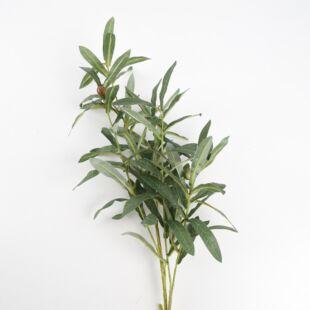 KADEN OLIVE BRANCH PLANT